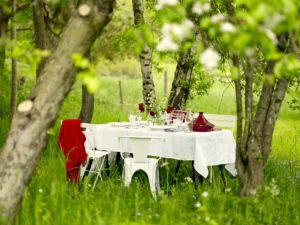 cuisine en pleine nature