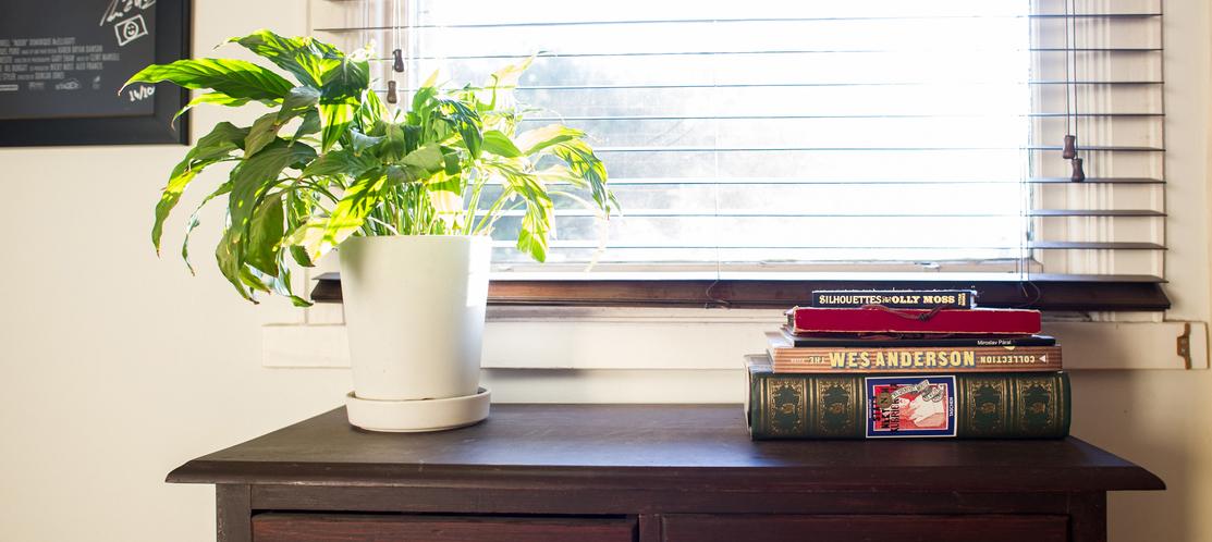 Plante en pot pour intérieur