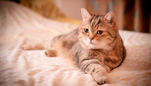 Chat allongé sur un lit