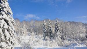 Mon chalet dans les Vosges