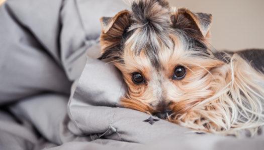 Avoir un animal dans un appartement : les règles