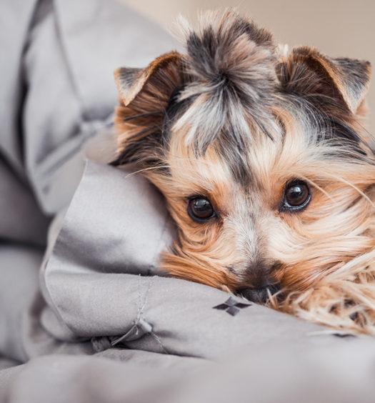 Avoir un animal dans un appartement