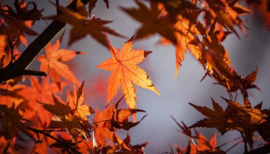 Décoration: inspiration d'automne