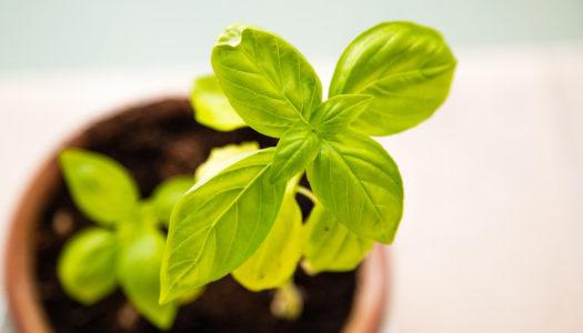 Cultiver des herbes aromatiques quand on n'a pas d'extérieur