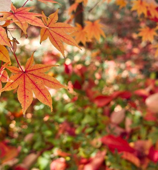 Entretenir sa maison en automne
